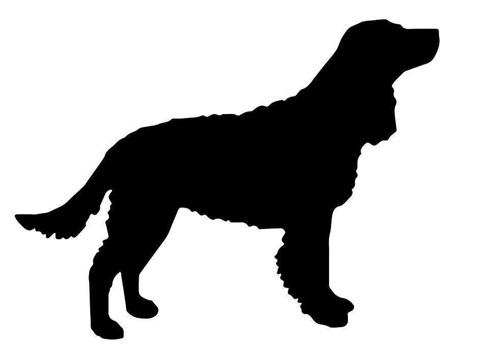 Dog, Canine, Mammal, Cute, Animal