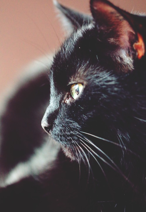 Cat, Cute, Portrait, Animal, Mammal