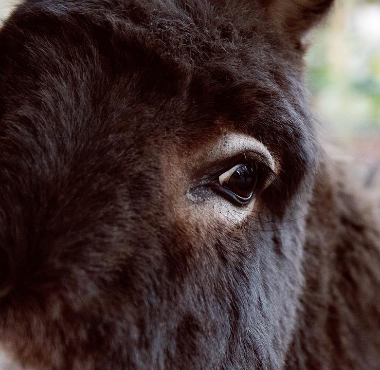 Donkey, Mammal, Animal, Animal World, Eye, Head