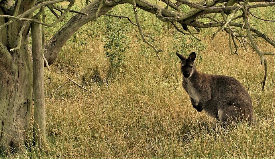 Nature, Mammal, Grass, Wildlife, Tree, Outdoors, Animal