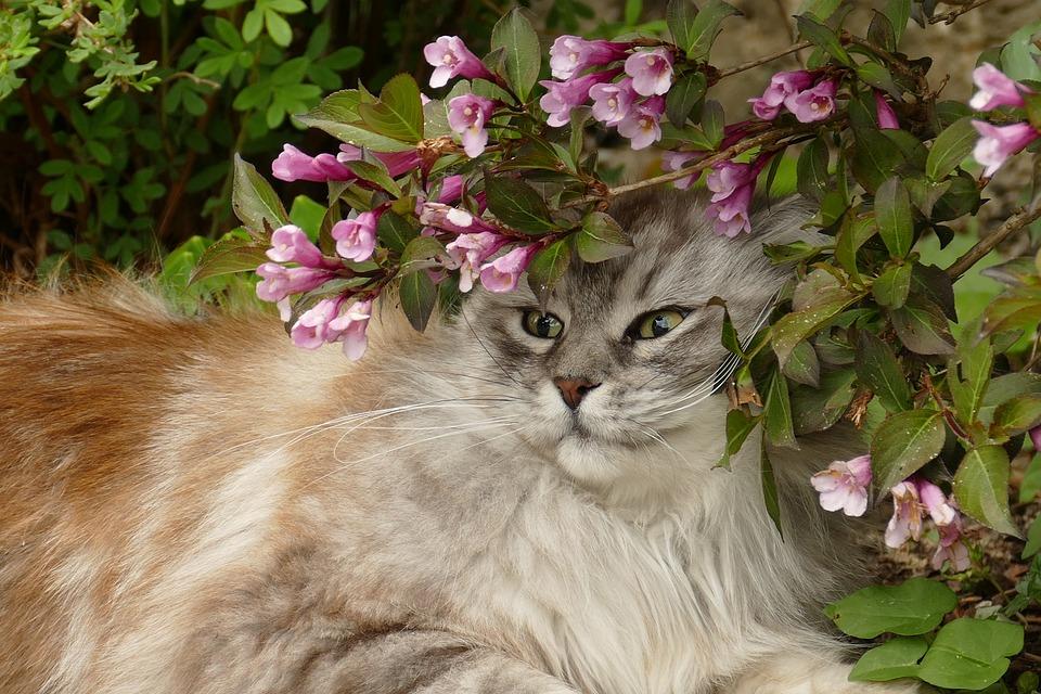 Cat, Pet, Fauna, Mammal, Long-haired, Eyes, Flower