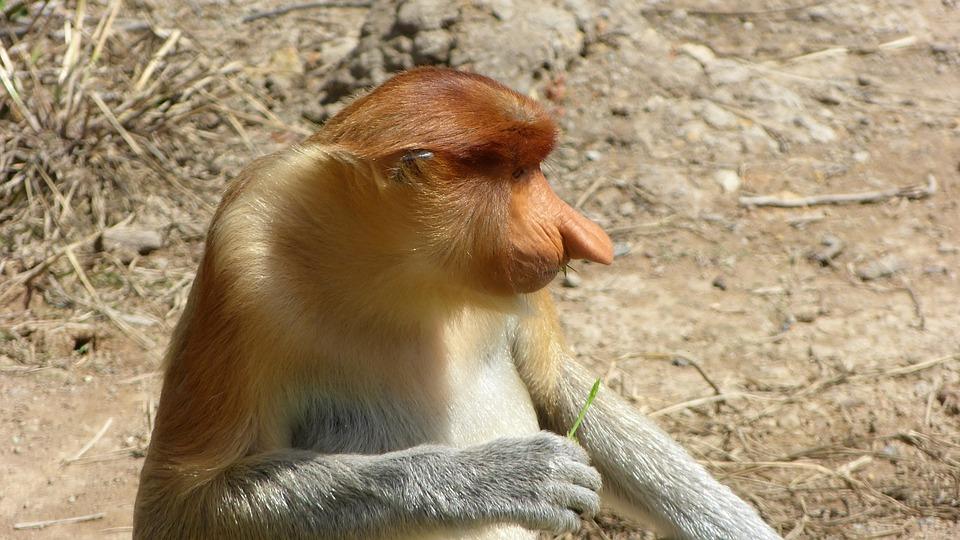 Animal World, Nature, Animal, Monkey, Sit, Mammal