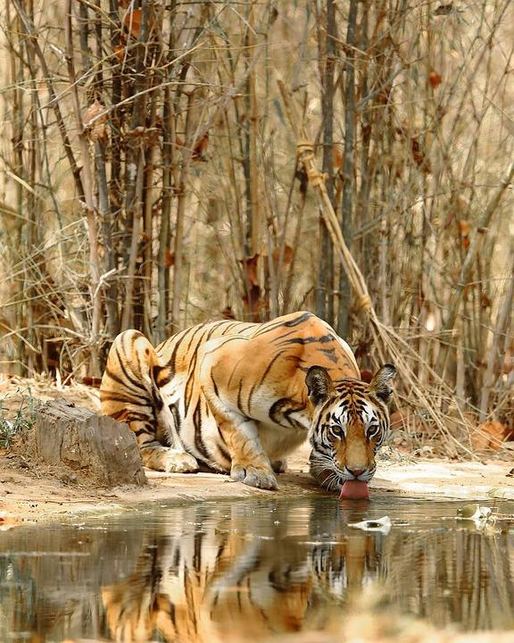 Nature, Animal, Cat, Mammal, Carnivore, Wildlife