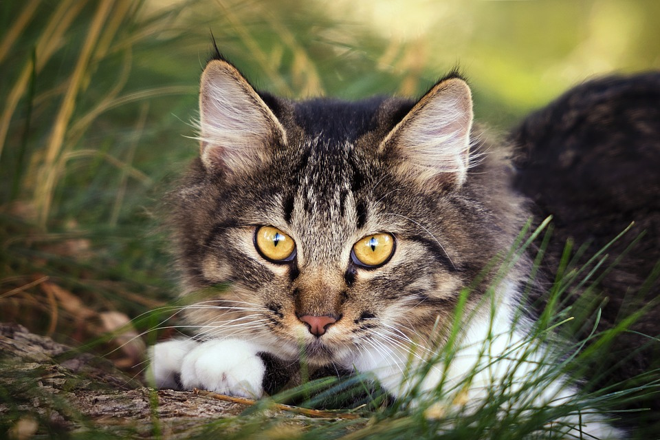 Nature, Animal, Cute, Little, Mammal