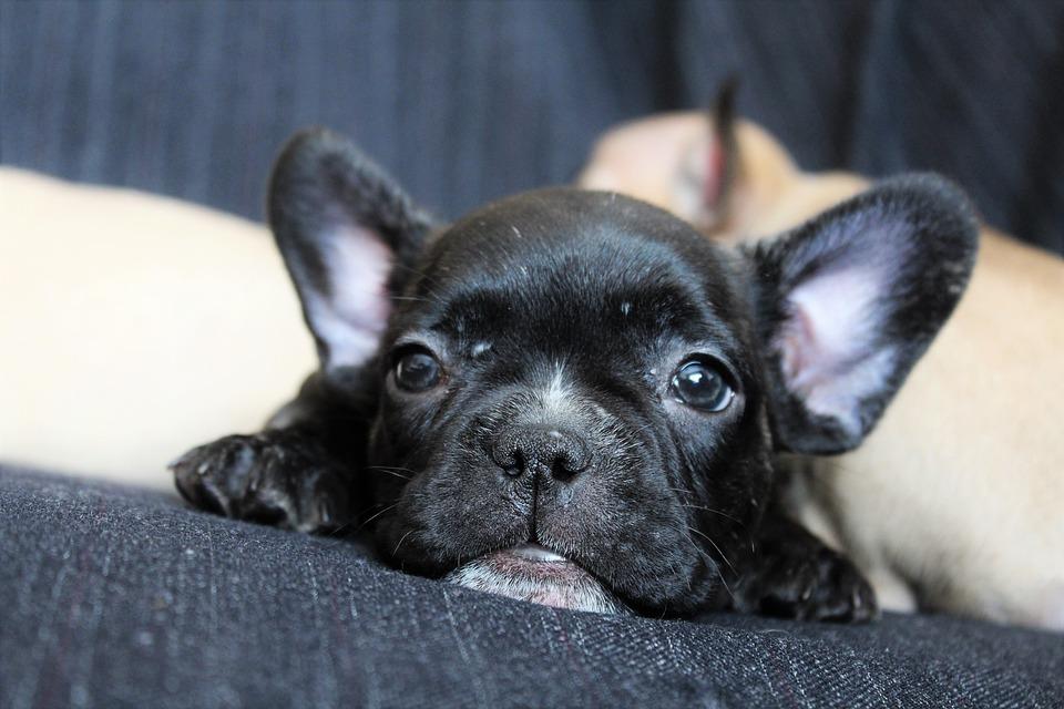 Dog, Puppy, Nice, Animals, Pet, Mammal, Young, Friend