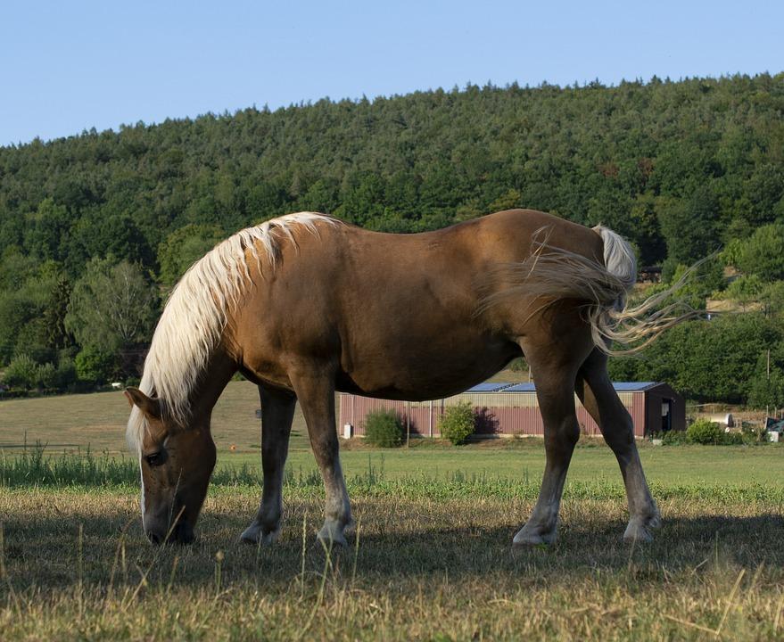 Horse, Pasture, Mammal, Landscape, Mare, Summer, Graze