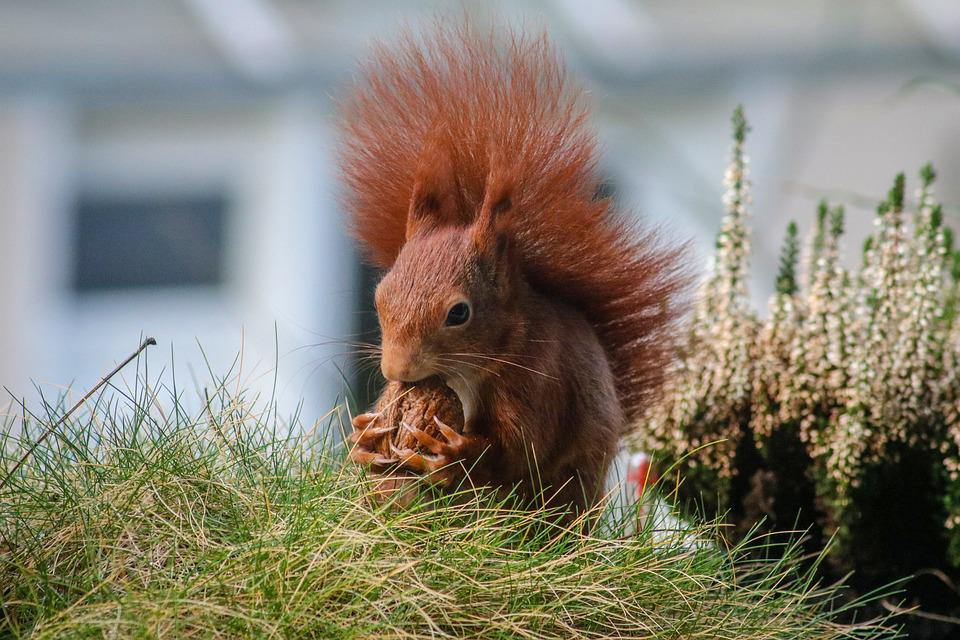 Nature, Mammal, Grass, Animal, Squirrel, Rodent, Hungry