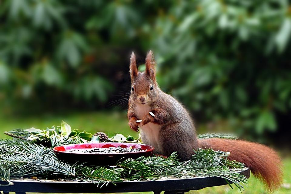 Animal, Squirrel, Mammal, Rodent