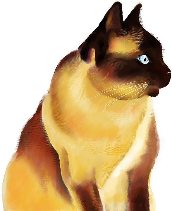 Siamese, Cat, Watercolor, Pet, Animal, Feline, Mammal