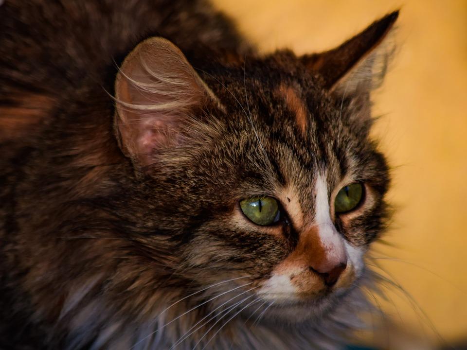 Cat, Stray, Cute, Animal, Mammal, Nature, Outdoors