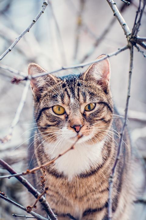 Cat, Pet, Tabby, Animal, Domestic Cat, Feline, Mammal