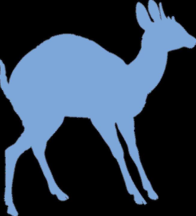 Antelope, Animal, Wildlife, Mammal, Ungulate, Hoofed