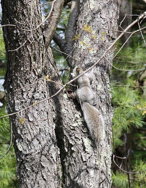 Animal, Squirrel, Wildlife, Mammal, Rodent, Species