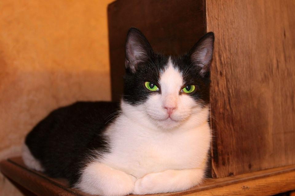 Cat, Mammals, Charming, Pets, Portrait, Animals, Kitten