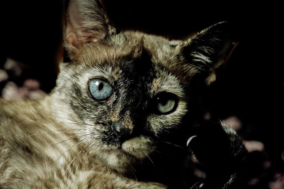 Cat, Cute, Mammals, Animalia