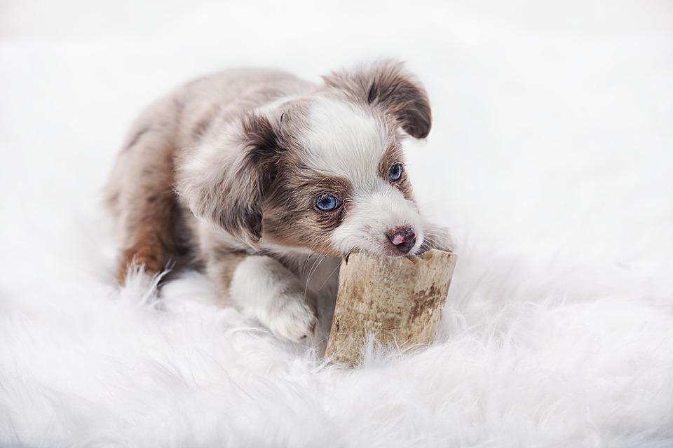 Dog, Mammals, Cute, Animal Kingdom, Pet, Portrait