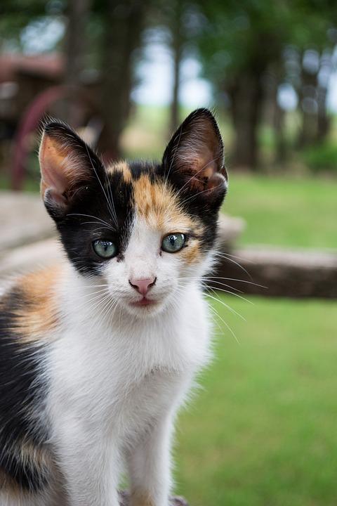 Cat, Feline, Cats, Pet, Animal, Pets, Puppy, Mammals