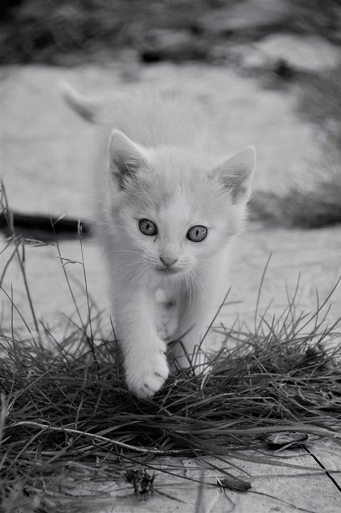 Kitten, Cat, Feline, Cute, Mammals, Animals, Young