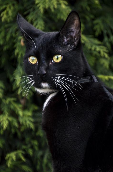 Animals, Nature, Mammals, Cat, Portrait, Fur, Pets