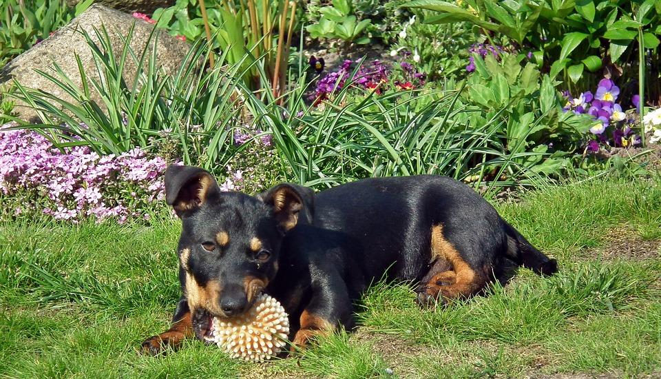 Mammals, Dog House, Animals, Charming, The Ball, Garden