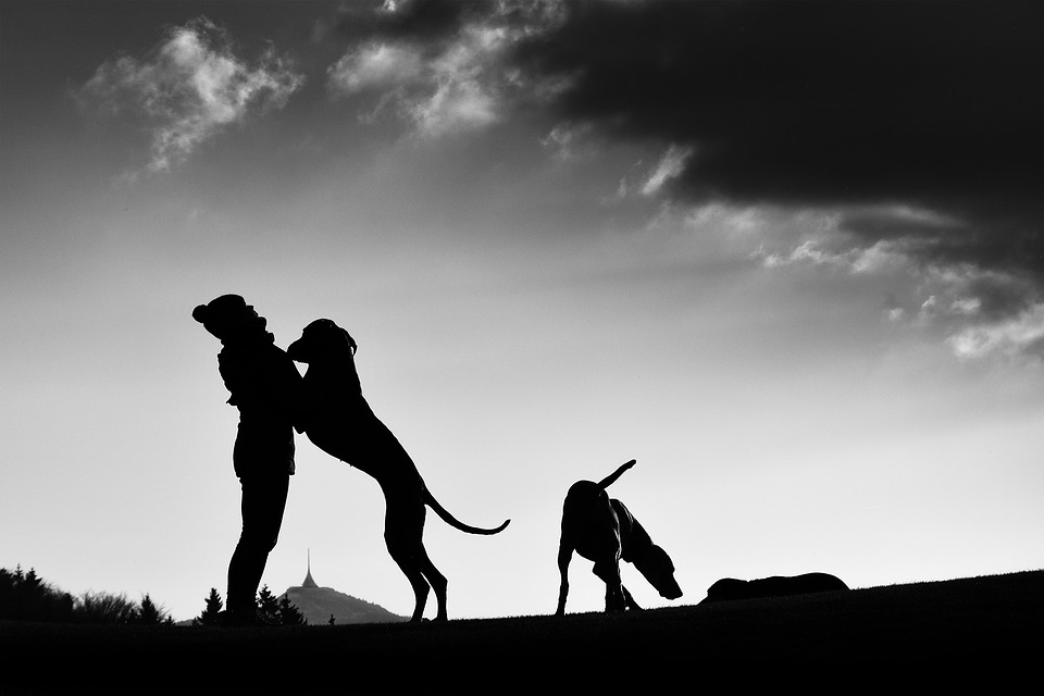 Silhouette, Man And Dog