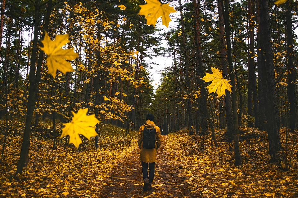 free photo man falling leaves autumn colorful fall walking max pixel