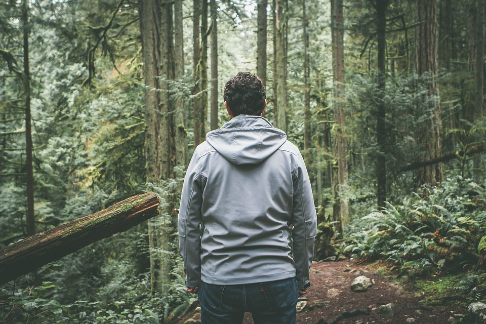 Forest, Man, Nature, Outdoors, Path, Trees, Woods