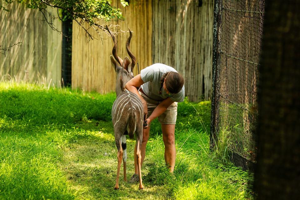 Zoo, Summer, Nature, Animals, Ungulates, Roe, Man, Care
