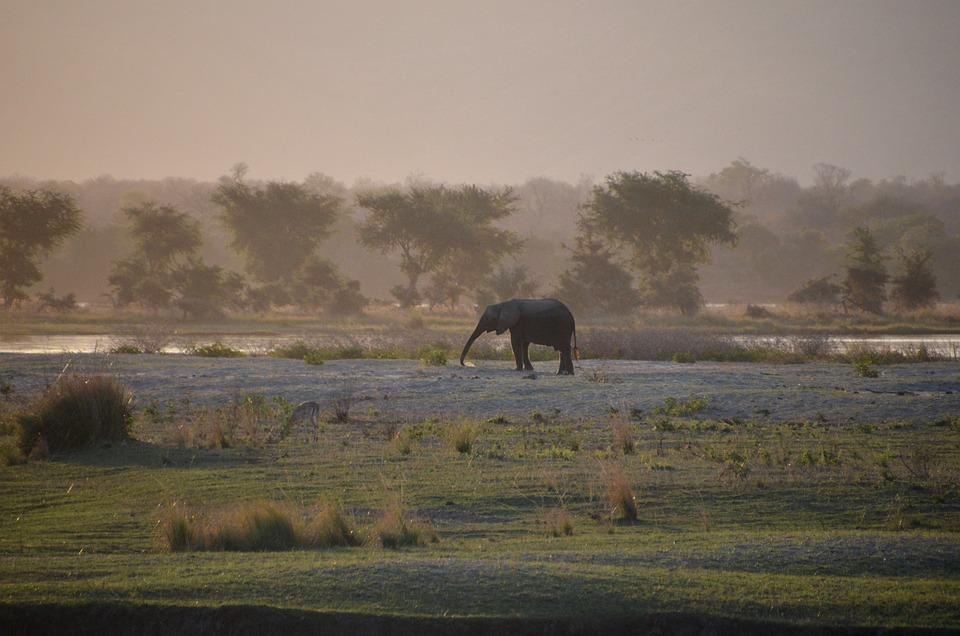 Africa, Elephant, African Bush Elephant, Manapools