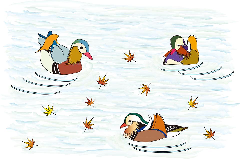 Mandarin Duck, Bird, Autumn