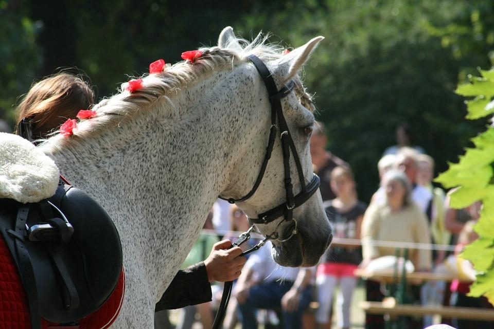 Horse, Dressage, Ride, Equestrian, Animals, Mane