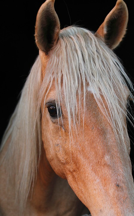 Horse, Animal, Equine, Equestrian, Cute, Mane, Stallion