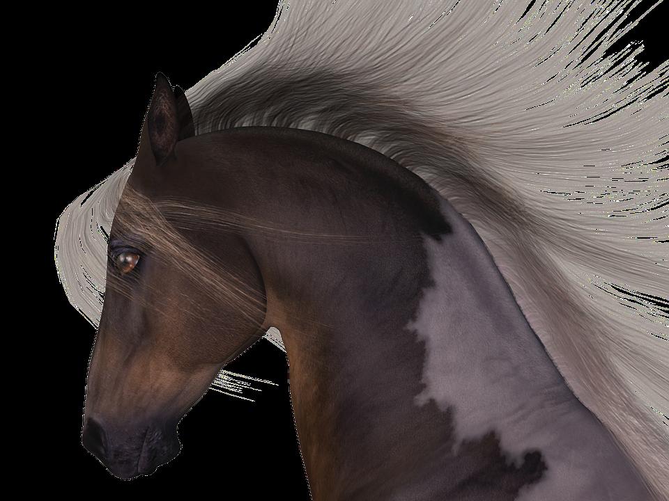 Horse, Mane, Head, Horse Head, Animal Portraits