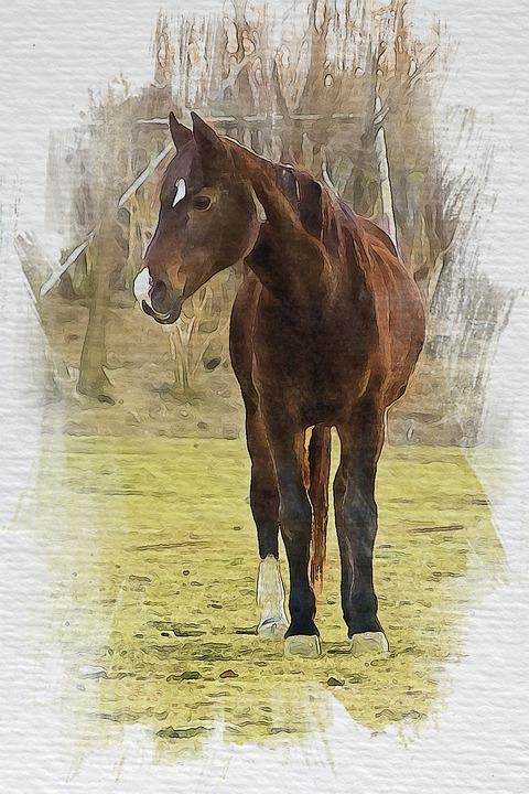 Horse, Equine, Stallion, Brown Horse, Animal, Mane