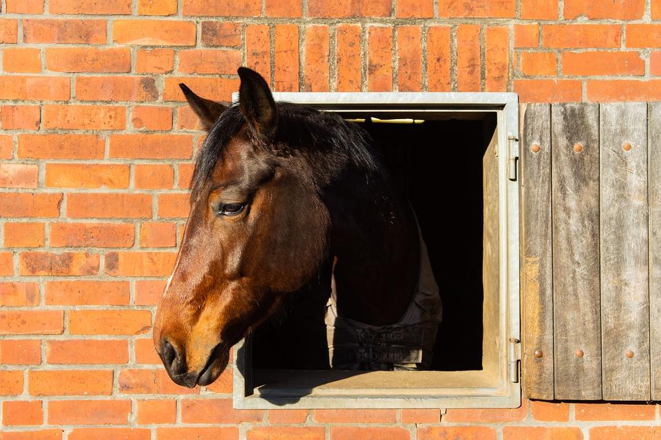 Horse, Head, Animal, Horse Head, Portrait, Farm, Mane