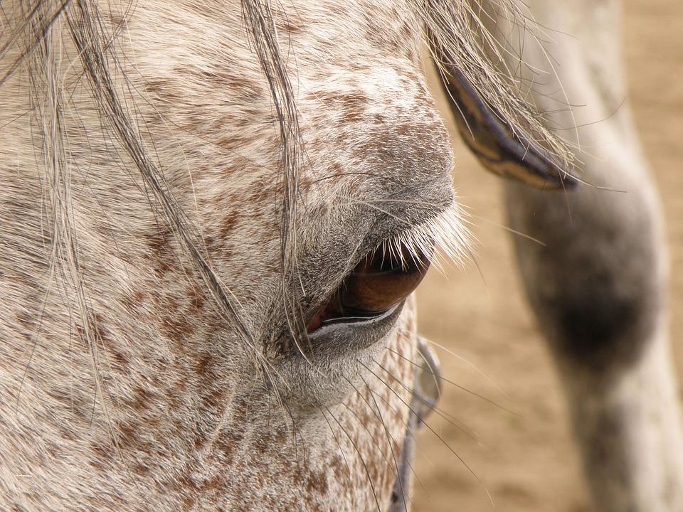 Horse, Dark, Eye, Algae, Head, White, Mane, Profile
