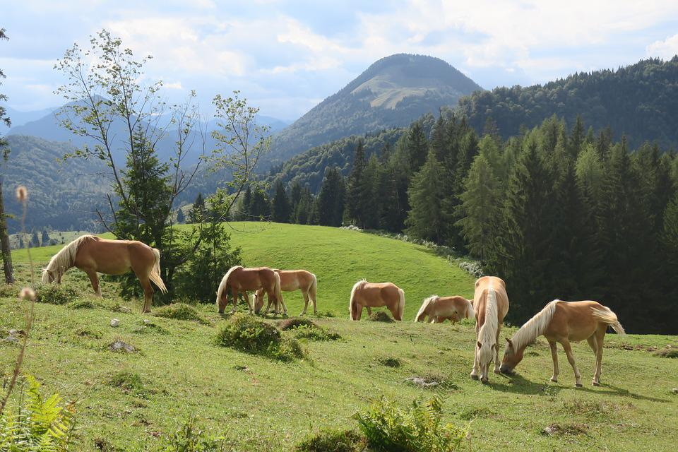 Horse, Horses, Animal, Nature, Ride, Pasture, Mane