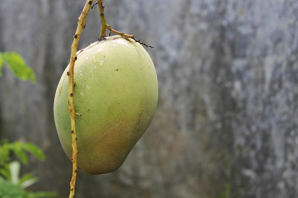 Fruit, Mango, Mango Fruit, Fresh Fruit, Food