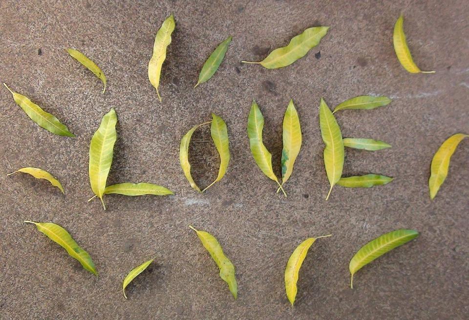Love, Leaves, Mango Leaves, Romantic, Design, Leaf