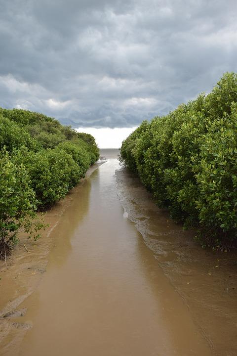 Mangrove Forest, Water Recreation, Mangrove Island