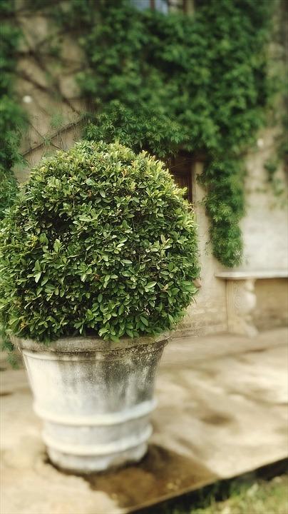 Tree, Plant, Topiary, Manicured, Garden, Green, Shrub