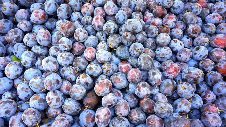 Plum, Food, Berries, Many, Nutrition, Fruits