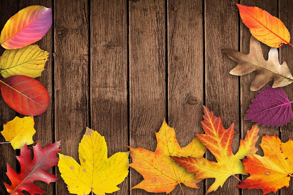 Autumn, Banner, Poster, Text Box, Invitation, Map, Wood