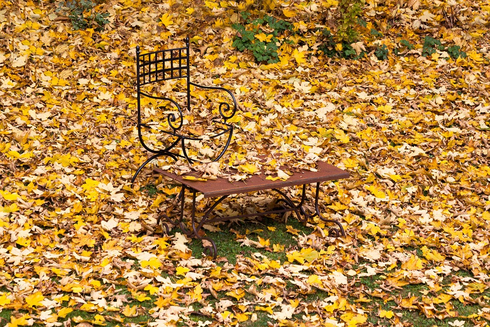 Autumn, Leaves, Maple, Yellow, Brown, Fall Color, Chair