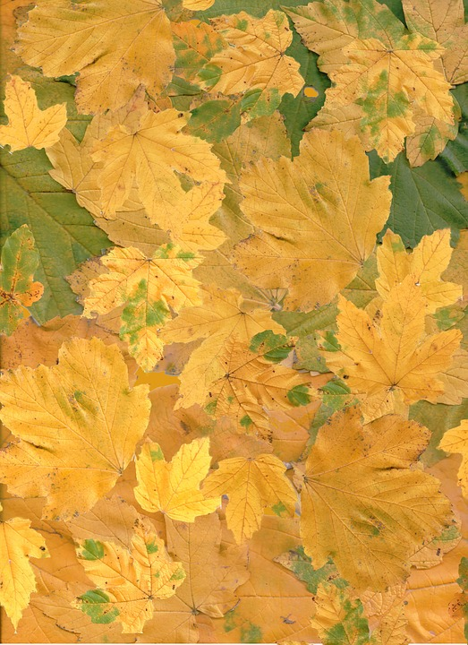 Autumn, Fall, Leaves, Maple, Background