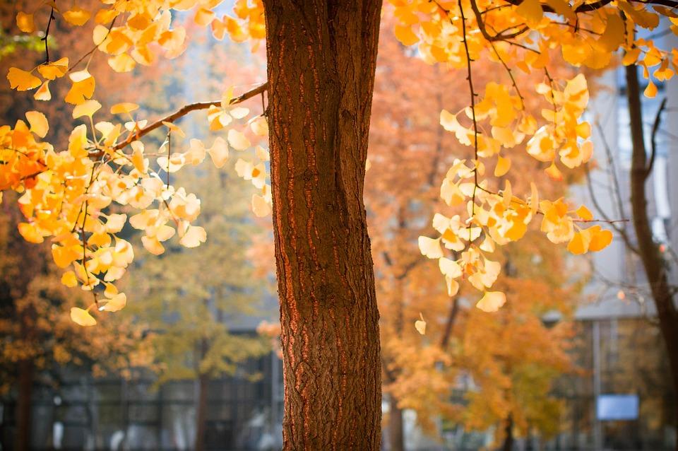 Autumn, Sheet, Season, Maple