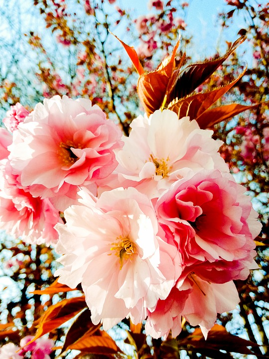 Spring, Afternoon, Flowers, Pastel Colours, March