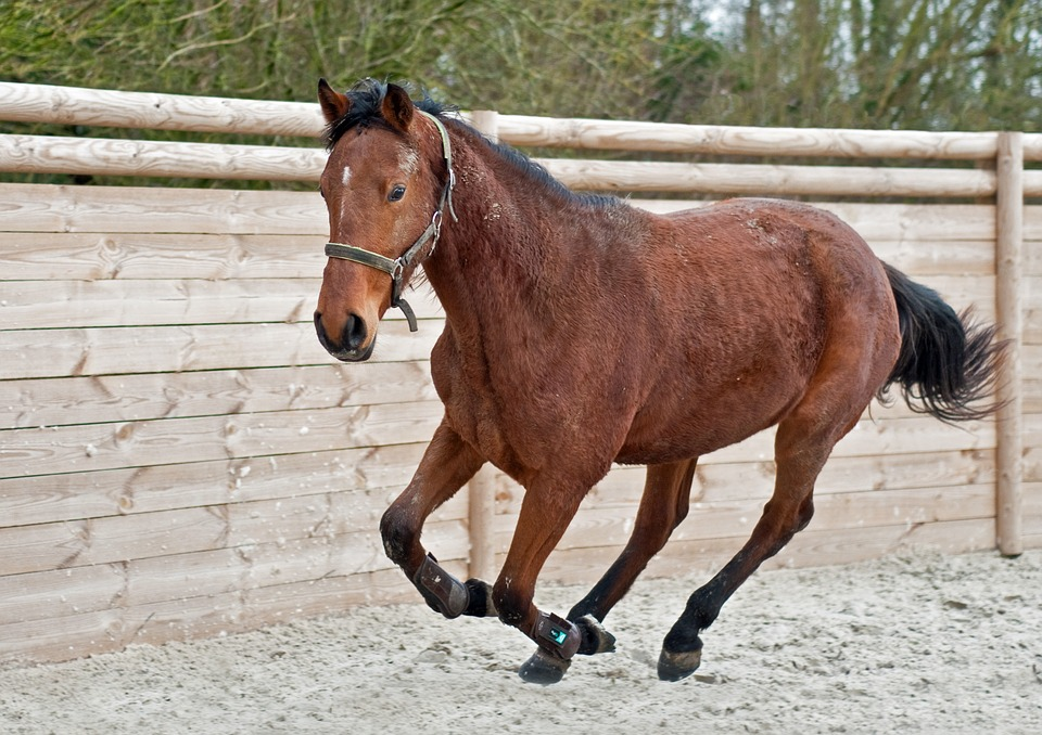 free photo mare horse run young filly max pixel