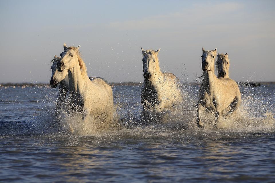 Horses, Herd, Horse, Horseback Riding, Mare, Nature