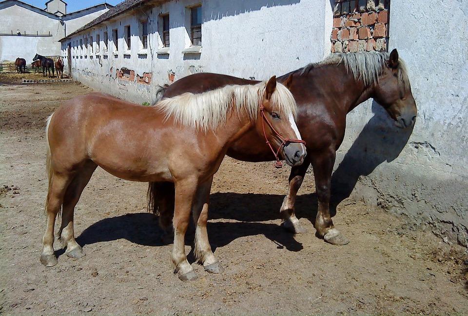 Horse, Mare, Stallion, A Foal, Horses